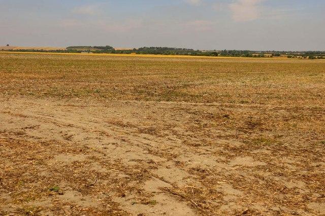 Farmland near Cholsey