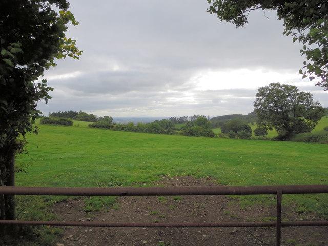 Pasture south of Nant-Uchaf