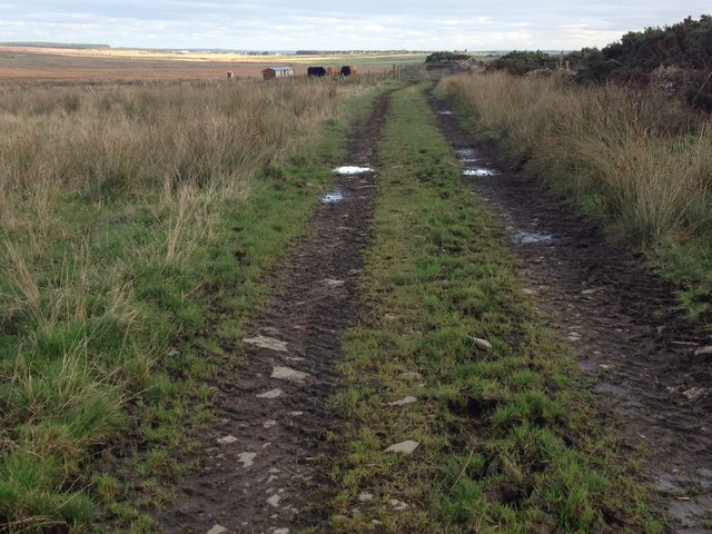 Farm track near Reaster