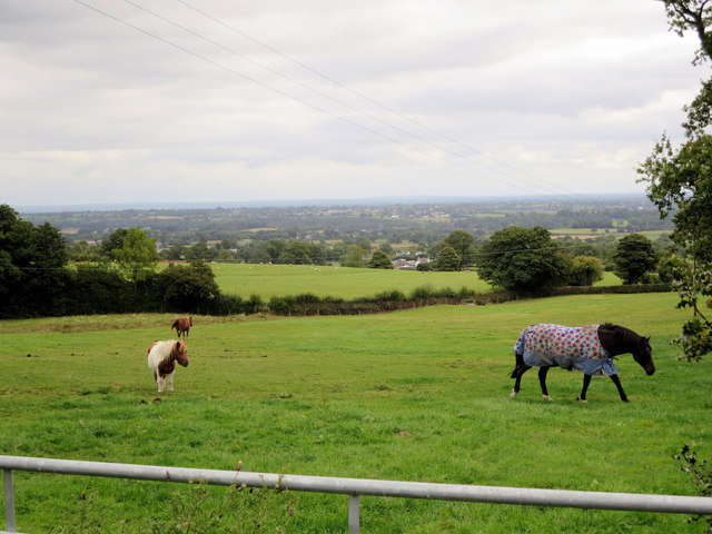 Pony paddock northeast of Nant-isaf Hall