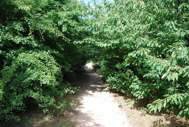 Footpath, Chislehurst Common