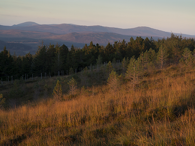 Rannoch forest at dusk