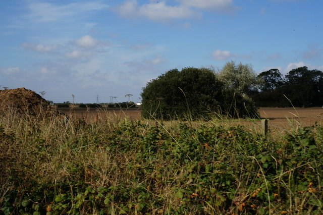 A small copse, South Holderness