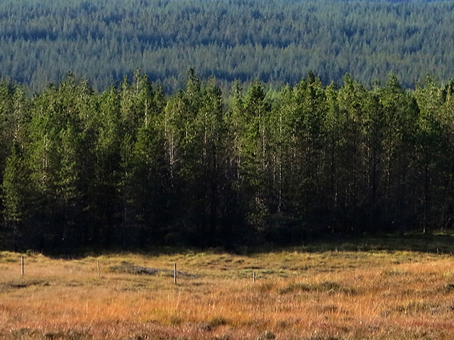 Rannoch Forest