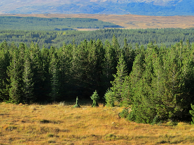Rannoch Forest