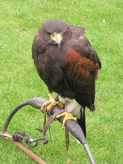 Bird of prey awaits