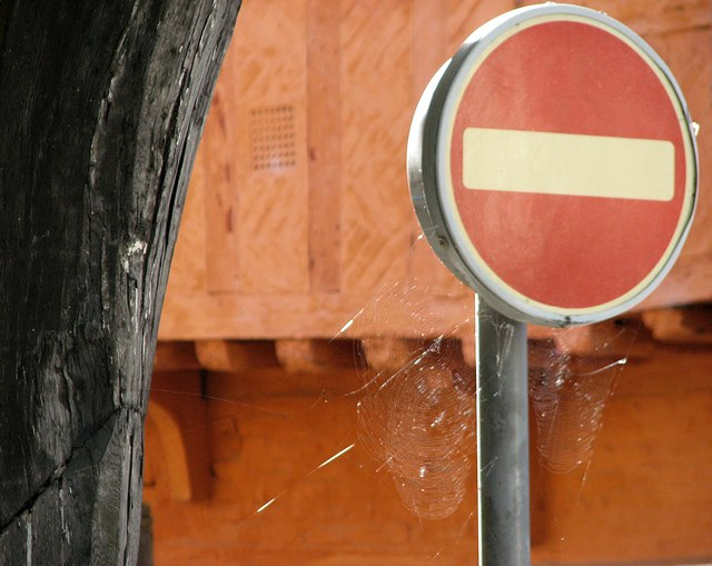 King's Lynn: sunlit spiders' webs