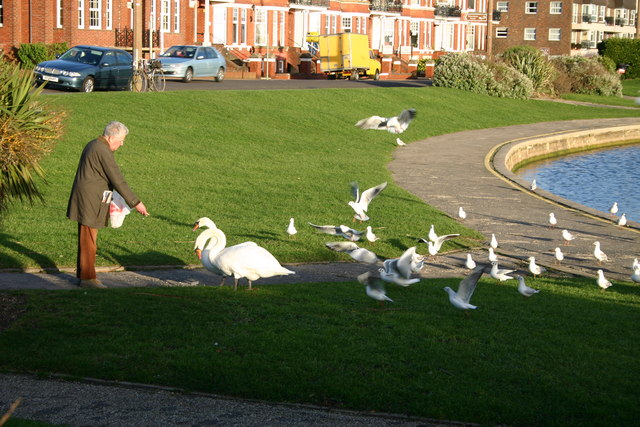 Feeding Time at Oyster Pond