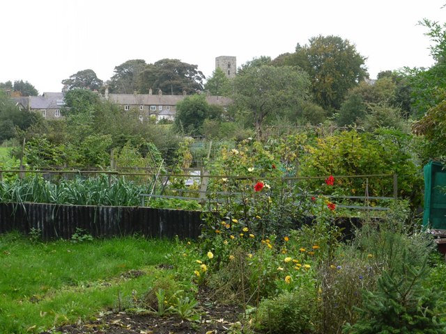 Allotments south of Ovingham