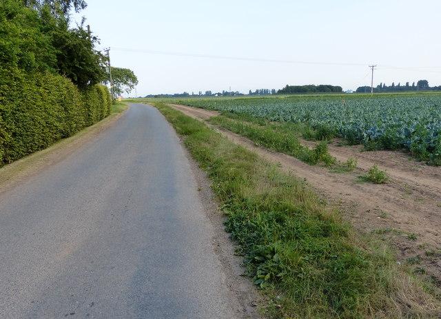 Sandholme Lane south of Frampton