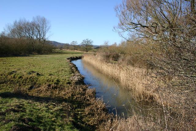 Amberley Swamp