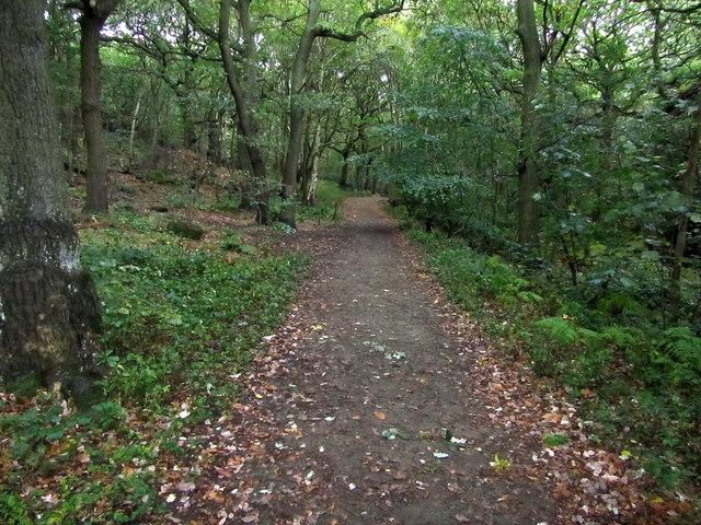 Footpath in Hawksworth Wood