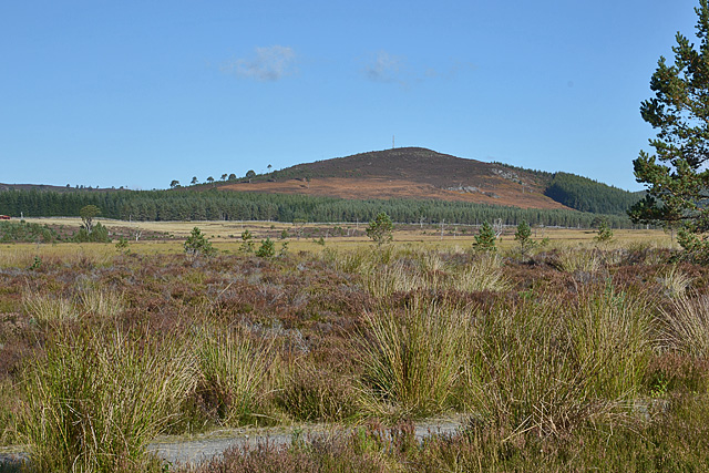 Moorland north of the Glenmore road