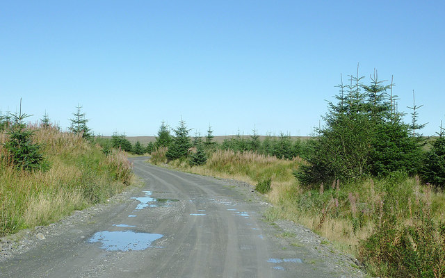 Forestry road on Pen y Cnwc, Powys