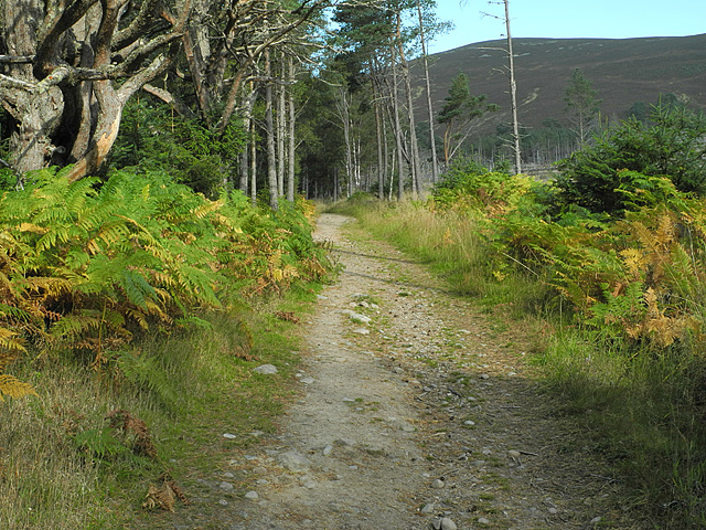 Path heading for Meall a' Bhuachaille