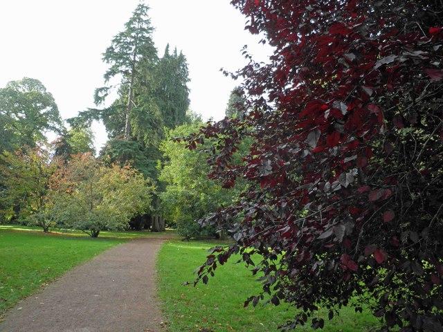 The Old arboretum at Westonbirt