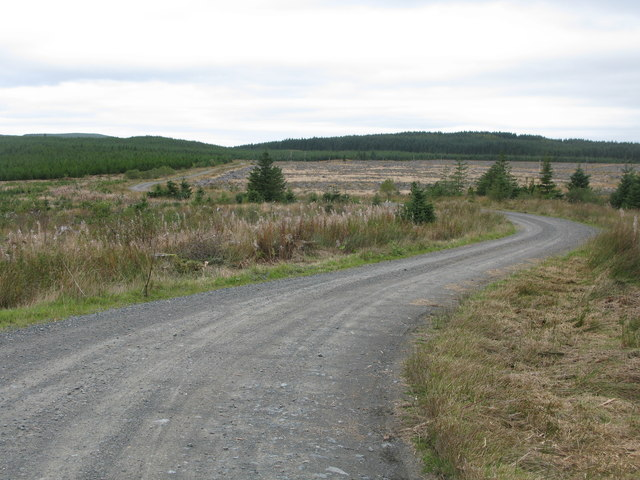 Forest Track, Carrick Forest