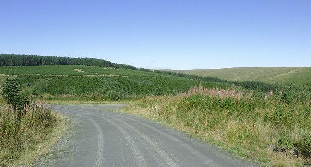 Forestry road and Esgair Cloddiad, Powys