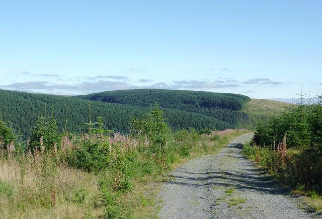Forestry road approaching Cwm Irfon, Powys