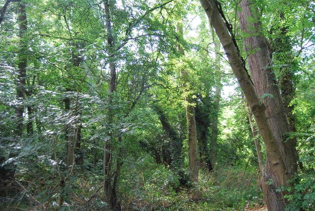 Chislehurst Common