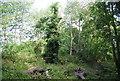 TQ4669 : Chislehurst Common by N Chadwick