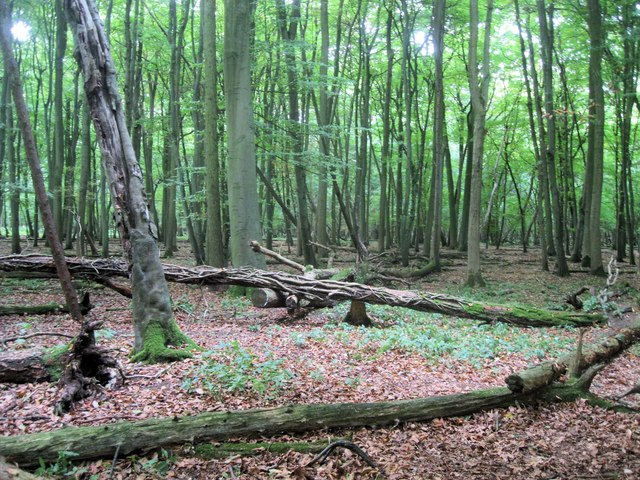 Fallen trees in Spring Wood