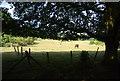 TQ4569 : Horses grazing by N Chadwick