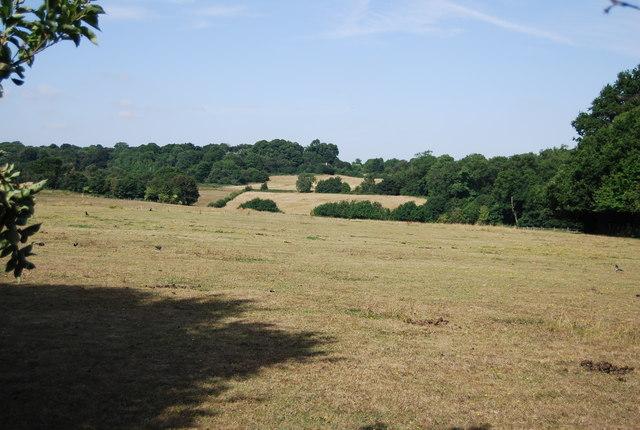 Farmland, Scadbury Park