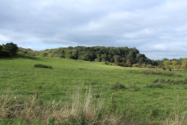 Farmland & Woodland near Old Bank