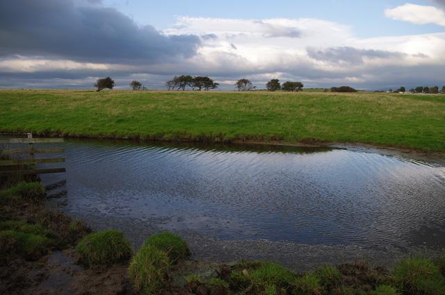 Janson Pool