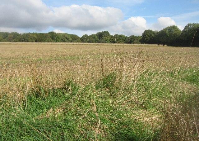Farmland by Halves Wood