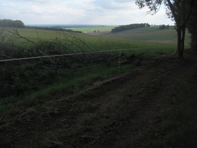 New fence line by Gaston Wood