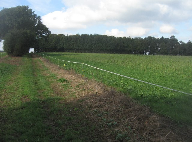 Path between the fields