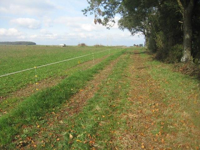 Path & farm track