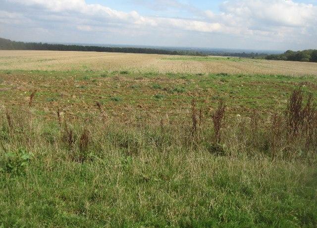 Post harvest scene - Hampshire Downs