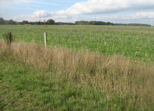 Farmland east of Hannington