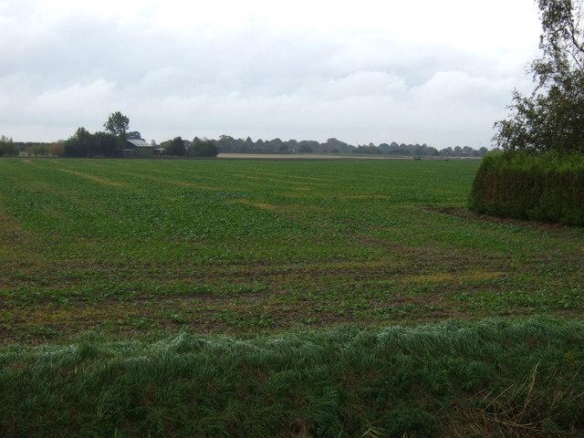 Farmland, Pode Hole Farm