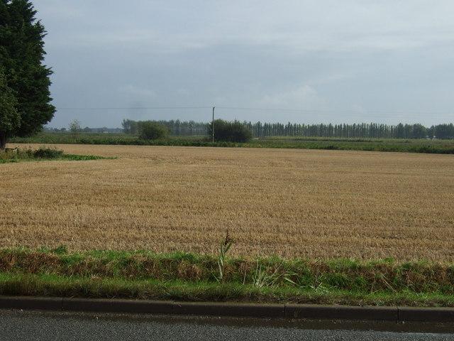 Farmland, Pinchbeck West
