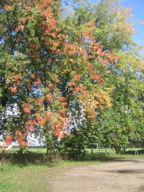 Autumn is on the way
