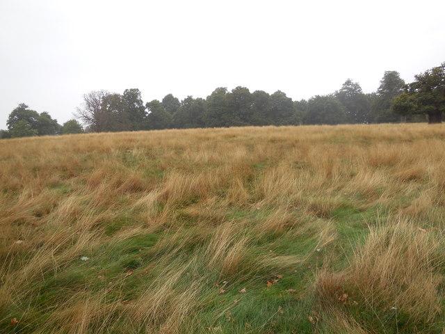 Petersham Marshes