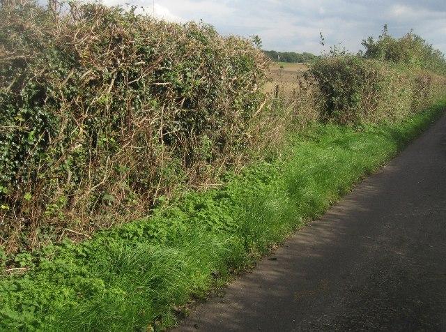 View along Ibworth Lane