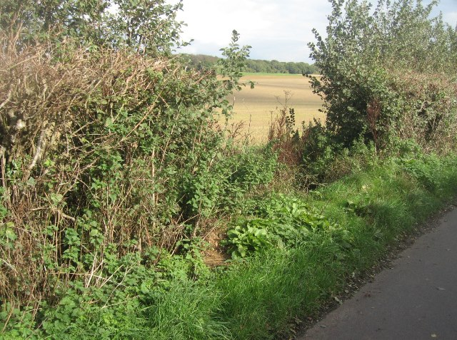 Gap in the hedge - Ibworth Lane