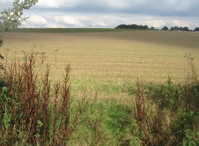 Fields north of Ibworth Lane