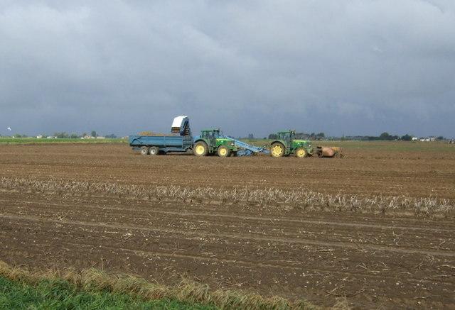 Potato harvesting off Black Hole Drove