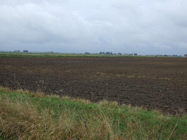 Farmland, Pinchbeck North Fen