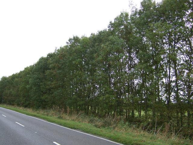 Trees beside Bourne Road