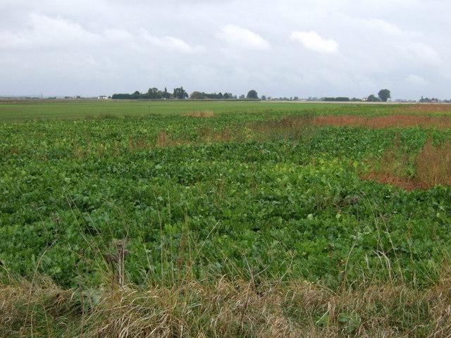 Crop field off Bourne Road