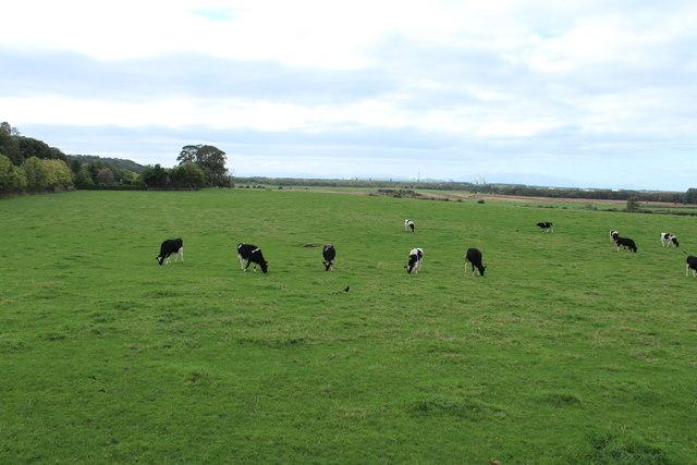 Farmland near Dundonald