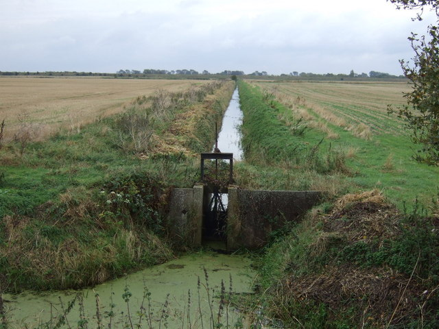 Drain with sluice