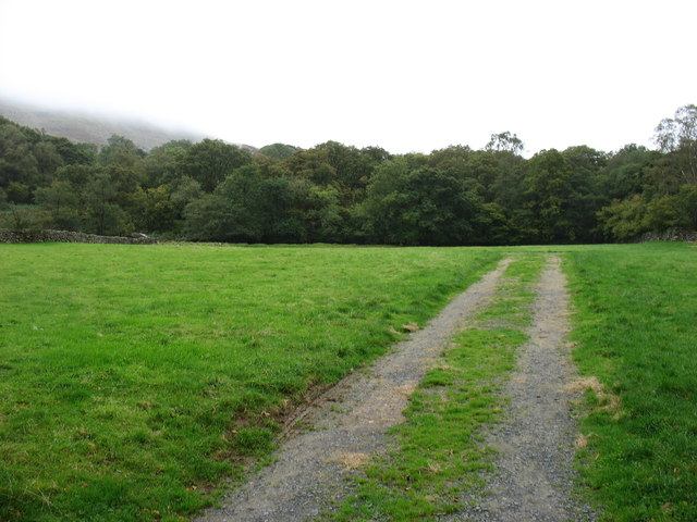 Field and woods by the Newfield Inn, Seathwaite